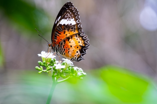 Colourful butterfly on white blooming flower in the forest