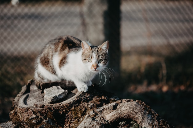 Colourful cat outdoor