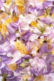 カラフルな花の花冠の背景