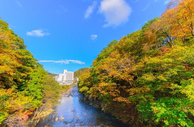 Colourful forest on autumn season in jozankei,
