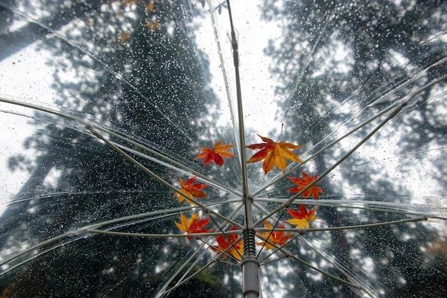 傘の上に落ちた日本のカエデ(momiji)の色とりどり。雨の日の背景。