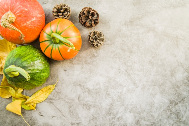 Colourful pumpkins on table with pine cone