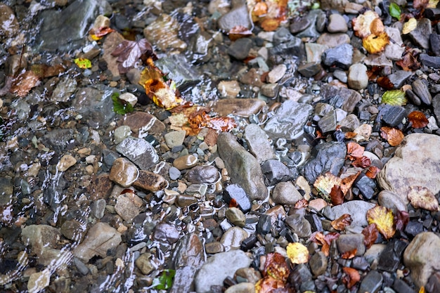 Colourful wet pebble stone in stream water with autumn falling leaf background close up fall season