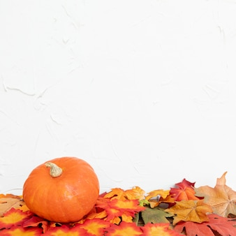 Colourul leaves and pumpkin with white background