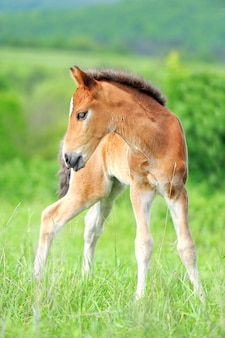 Colt in meadow