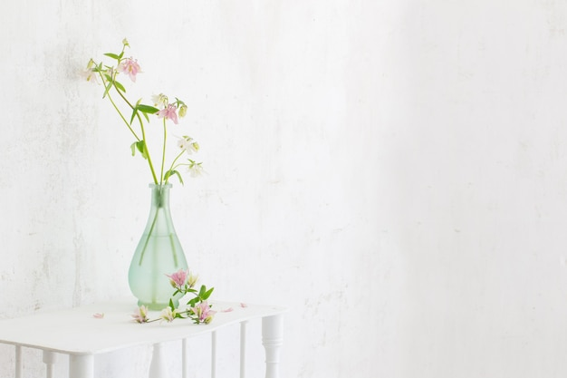 Columbine flowers in vase on background white wall