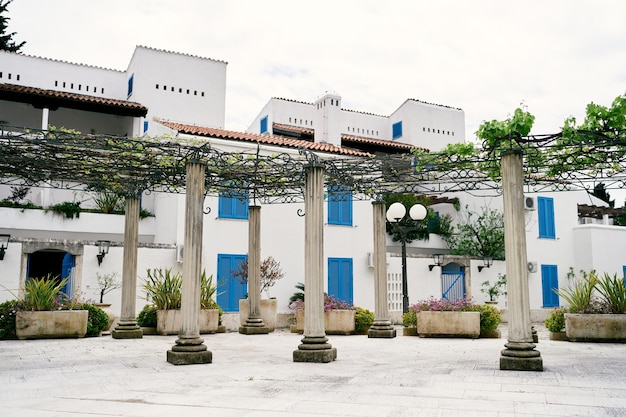 Columns with weaving plants and bushes in flowerpots against buildings