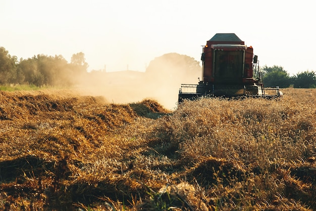 Combine agricultural harvester gathering a ripe crop on field