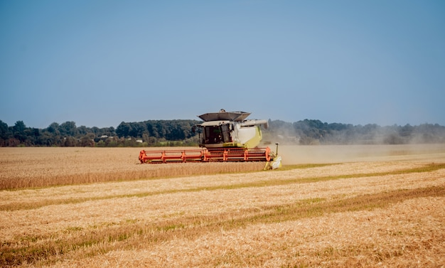 Combine harvester in action on wheat field. process of gathering a ripe crop.