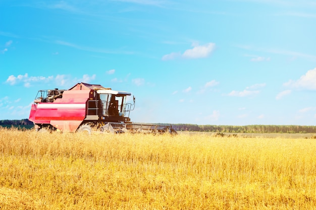 Combine harvester agriculture machine harvesting ripe wheat in farm field