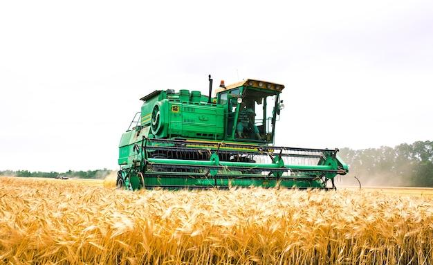 Зерноуборочный комбайн урожай золотой пшеницы. сельское хозяйство