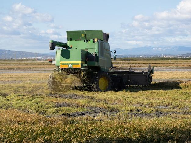 Зерноуборочный комбайн на уборке зрелого рисового поля. концепция сельского хозяйства