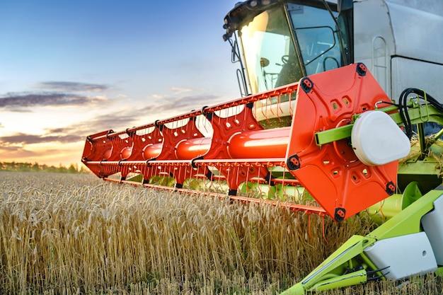 Зерноуборочный комбайн собирает спелую пшеницу на поле