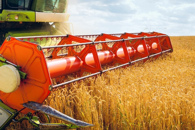 Combine harvester harvests ripe wheat. agriculture image