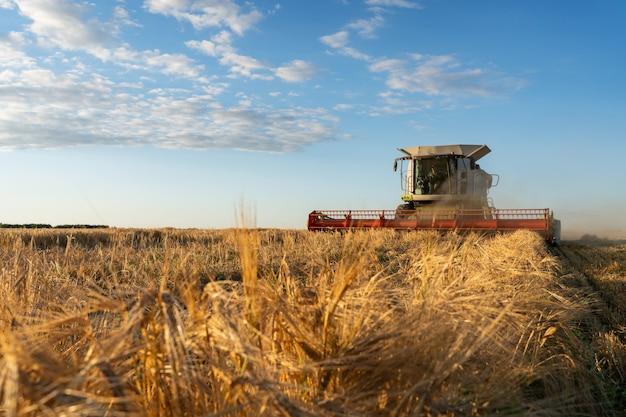 コンバインは熟した小麦を収穫します。農業イメージ