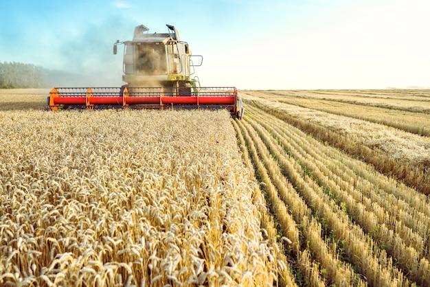 Комбайн собирает урожай спелой пшеницы. . изображение сельского хозяйства