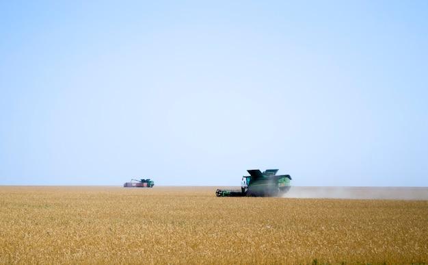 Зерноуборочный комбайн собирает урожай спелой пшеницы в сельском хозяйстве