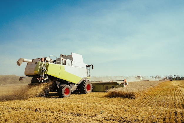 Combine harvester harvests ripe wheat concept of a rich harvest agriculture image