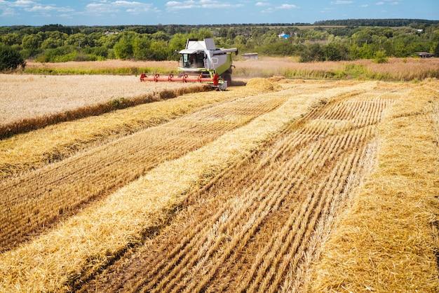 Комбайн собирает урожай спелой пшеницы. зрелые колосья золотого поля. концепция богатого урожая. изображение сельского хозяйства