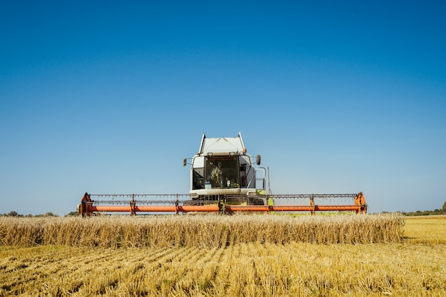 コンバインは熟した小麦を収穫します。夕焼けの曇ったオレンジ色の空の背景にゴールドフィールドの熟した耳。 。豊作のコンセプト。農業画像