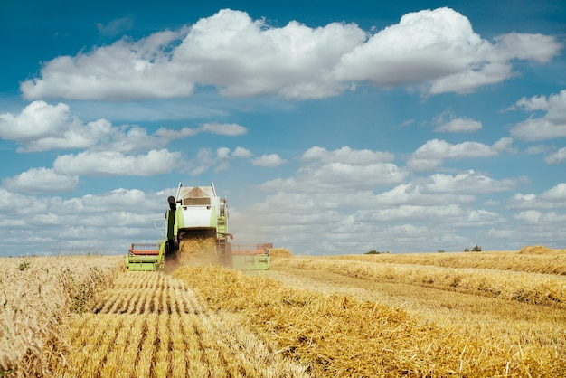 수확기를 결합하여 익은 밀을 수확합니다. 일몰 흐린 오렌지 하늘 배경에 골드 필드의 익은 귀. . 풍부한 수확의 개념. 농업 이미지