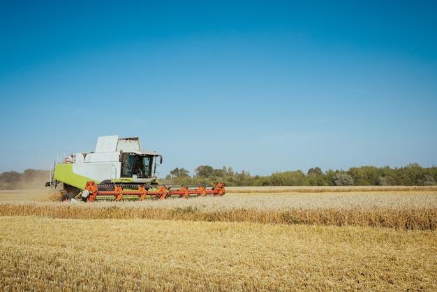 결합 수확기는 일몰 흐린 오렌지 하늘에 황금 필드의 익은 밀 익은 귀를 수확