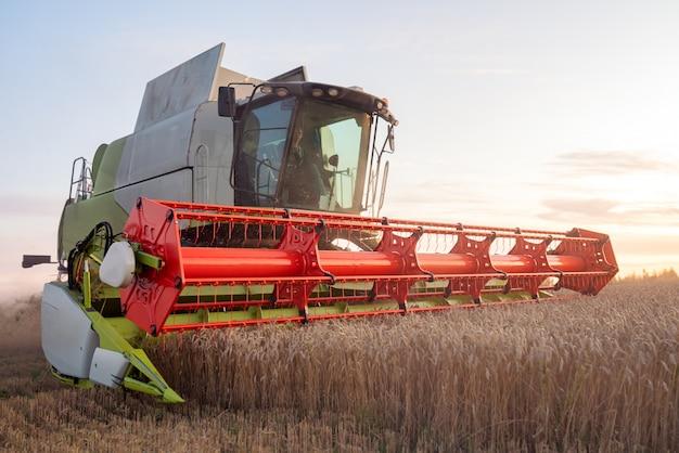 Зерноуборочный комбайн собирает спелую пшеницу. спелые колосья золотого поля на закате облачно оранжевого неба