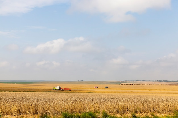 Combine harvester and other agricultural machinery harvesting wheat in the summer, landscape