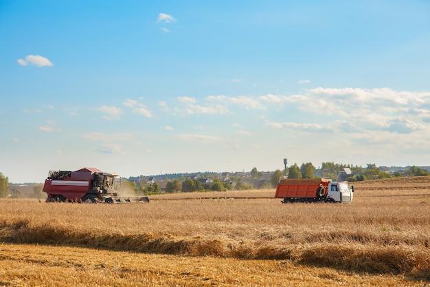 コンバインは畑の小麦を取り除きます。パンの生産。