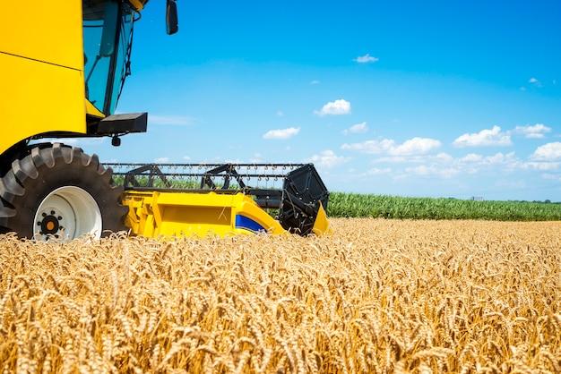 Зерноуборочный комбайн работает в поле