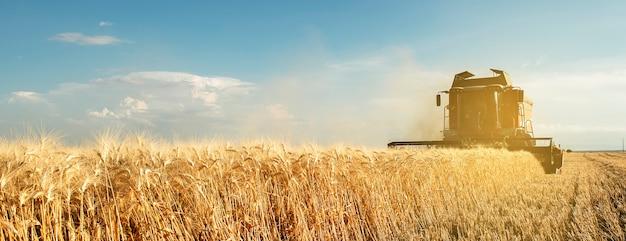 Комбайн для уборки урожая зерна в апулии Premium Фотографии