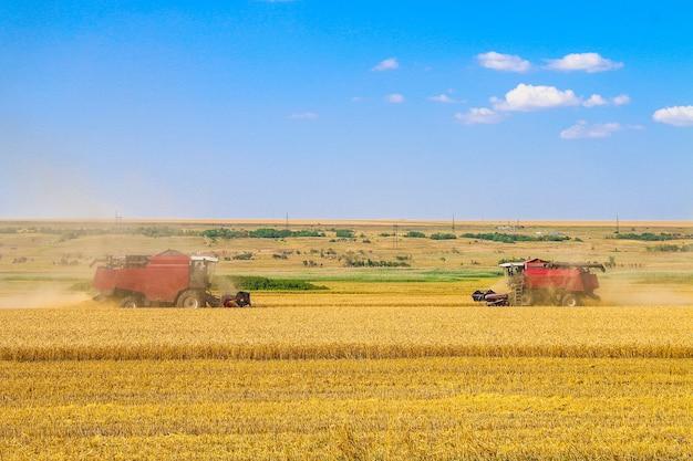 黄金の熟した小麦畑を収穫する機械を組み合わせる