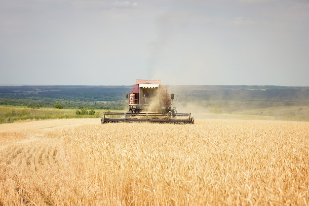 Combine mows wheat field, harvest period, agricultural land