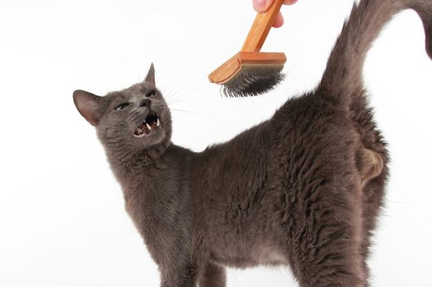 Расчесывание кисти серый кот на белом