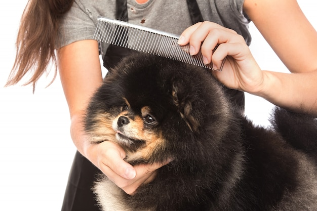 Combing a dog