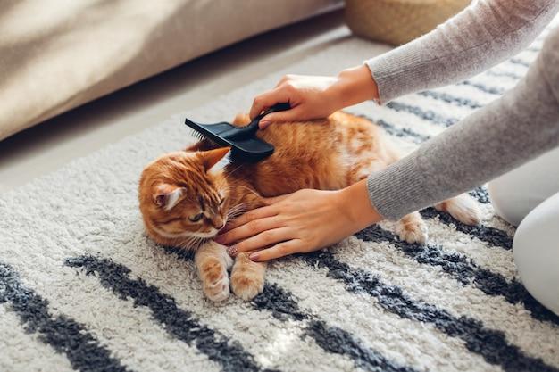 Расчесывать рыжий кот с гребешком в домашних условиях. женщина-владелец ухаживает за домашним животным для удаления волос.