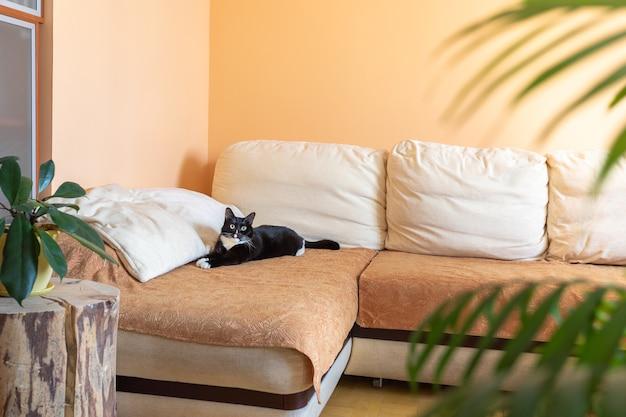 Комфортный домашний интерьер с черно-белым котом, лежащим на большом угловом диване, зелеными комнатными растениями и деревянным пнем в качестве креативной подставки.