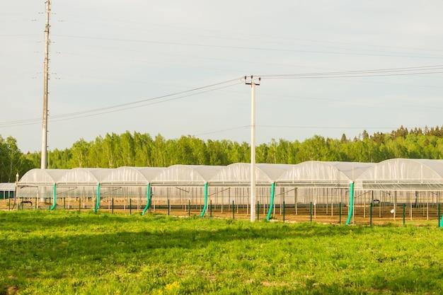 상업용 유리 온실. 야채와 꽃의 첨단 산업 생산.