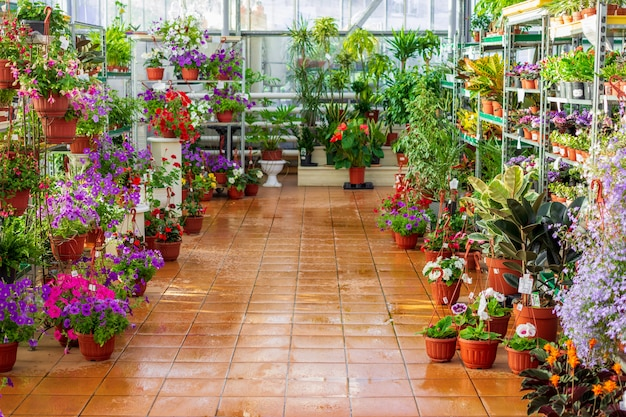 Commercial greenhouse shop selling flowers and plants in flowerpots