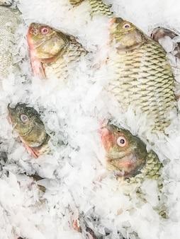 Обычная рыба-карп