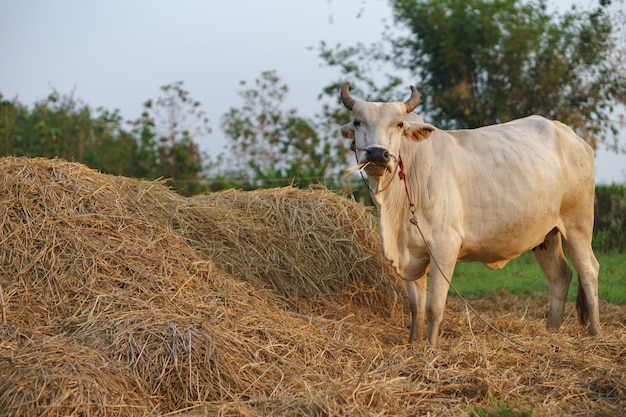 밥을 먹는 일반적인 소