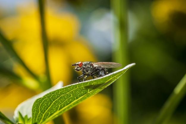 Обыкновенная муха на листе у реки драва