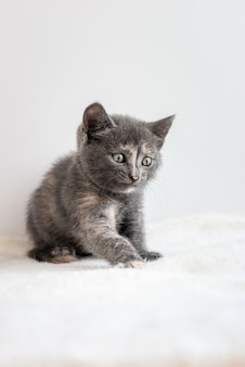 Common little grey kitten sitting on white fluffy fabric