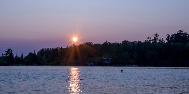 日の出の湖で泳ぐcommon loon(gavia immer)、オンタリオ州カナダ、lake of the woods