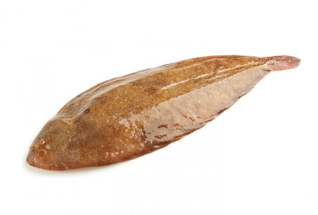Common sole
