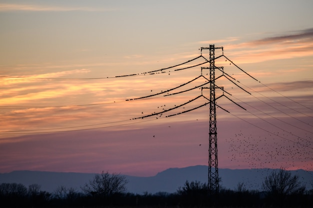 The common starling (sturnus vulgaris) flying in big groups on sunset
