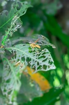 입으로 녹색 잎을 자르는 일반적인 노란색 말벌을 닫습니다.