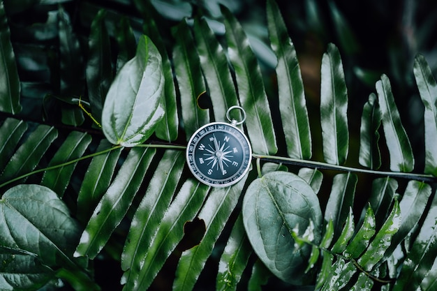 Компас среди листьев папоротника в тропических джунглях. концепция навигации открытия приключений.