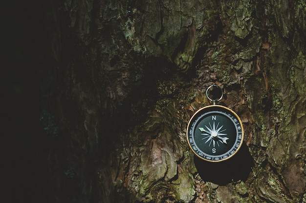 Compass in the forest, against the background of the bark of the tree.