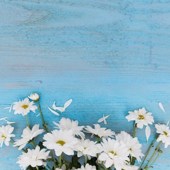 Composed white daisies on blue